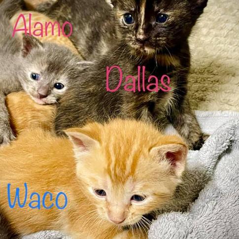 Alamo-Dallas-Waco1.jpg