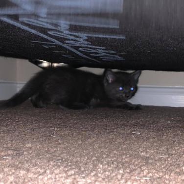 New kittens3.jpg