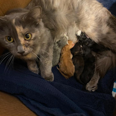 Momma Sarabi1.jpg