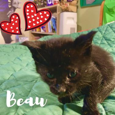 Beau-kitten1.jpg