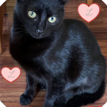 lUCY-BLACKCAT2.jpg