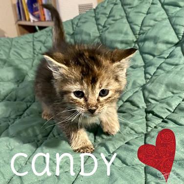 Candy-kitten1.jpg