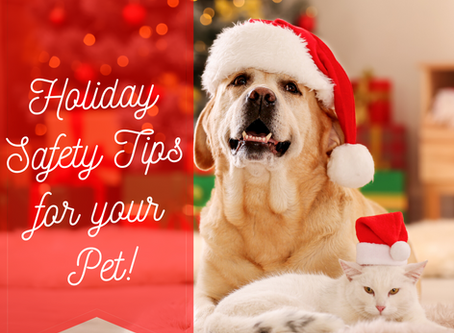 Company is coming! 'Tis the season to make sure you know these holiday pet safety tips.