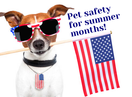 Summer Safety: Avoid putting your pet at risk with these tips for fireworks, cars and heatstroke