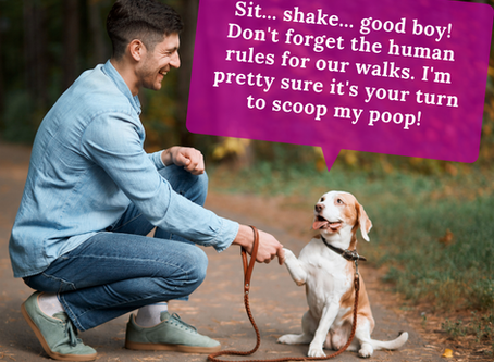 """""""Pet"""" Peeves and Animal Ordinances You Should Know"""