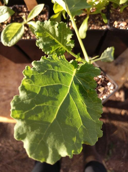 Kale, Pentland Brig