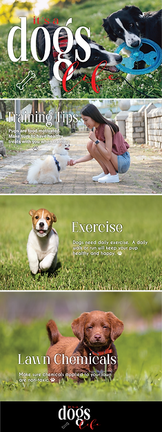dogslife-email-01.png