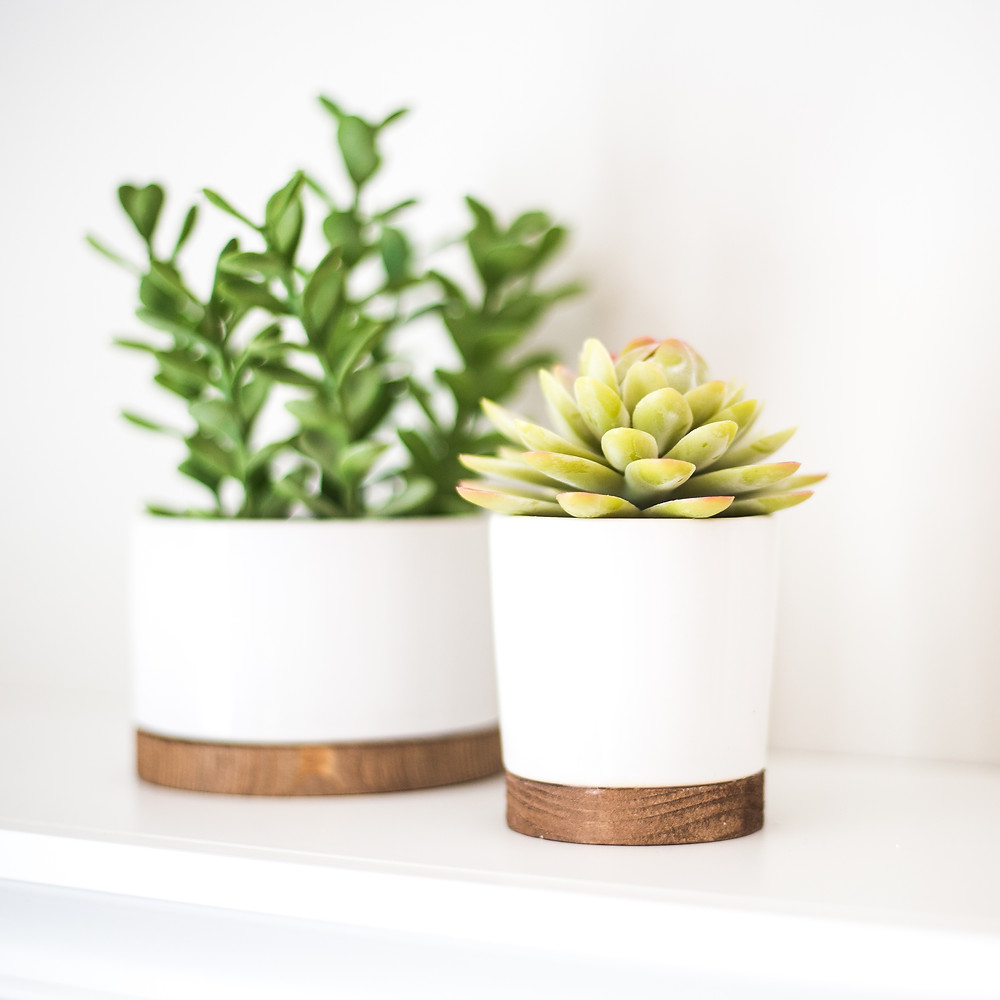 two succulent plants