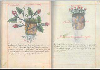 Códice de la Cruz Badiano,obra maestra de la medicina universal