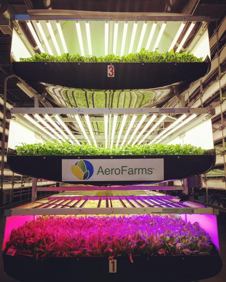 Aerofarm, verticale landbouw door Lemonfield Projects