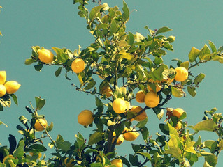 Nieuw initiatief van Lemonfield