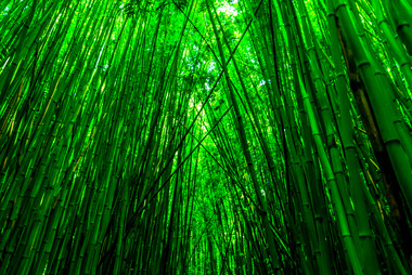 Bamboo Forest by Alberto Lama Photograph