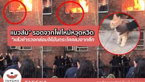 """แมวส้ม"""" รอดจากไฟไหม้หวุดหวิด หลังตำรวจกล่อมให้มันกระโดดลงจากตึก (มีคลิป)"""