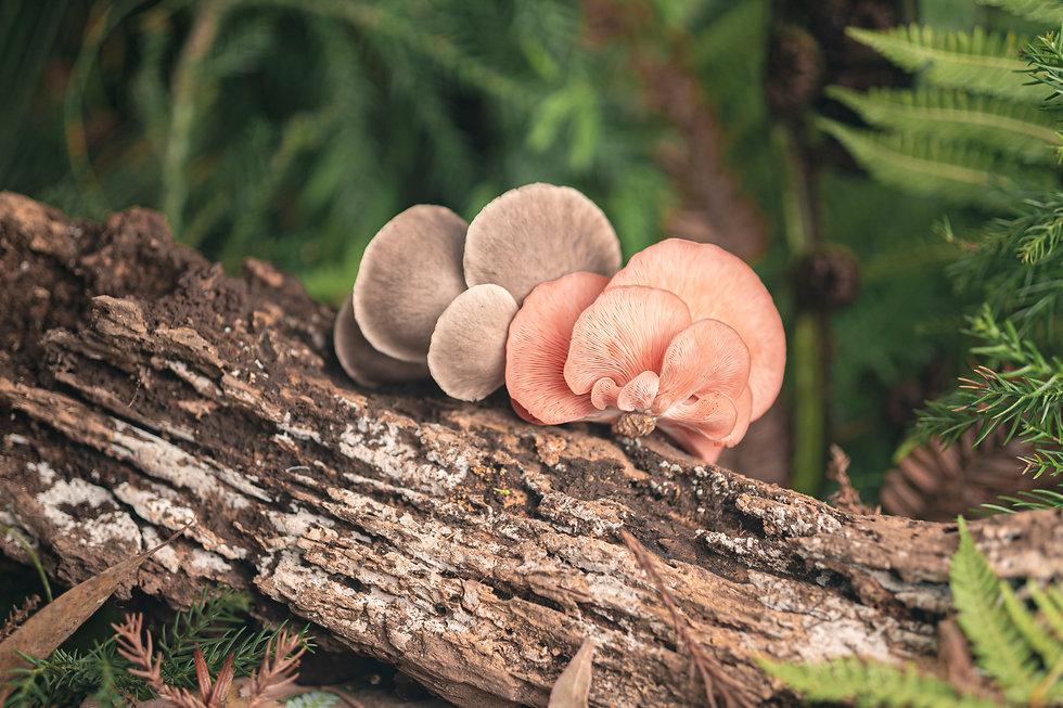 The Mushroom House - Website Images-6.jp