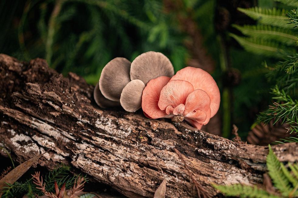 Mushroom House - Photos-5.jpg