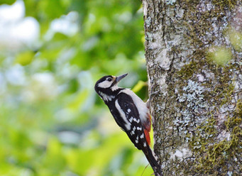 Local Safari!  Birding with Kids