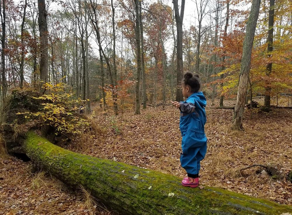 2 Year Old balancing on fallen tree, Photo by Ashley @urbanknotsmama