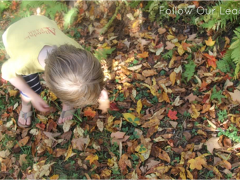 Exploring Math and Science with Leaves