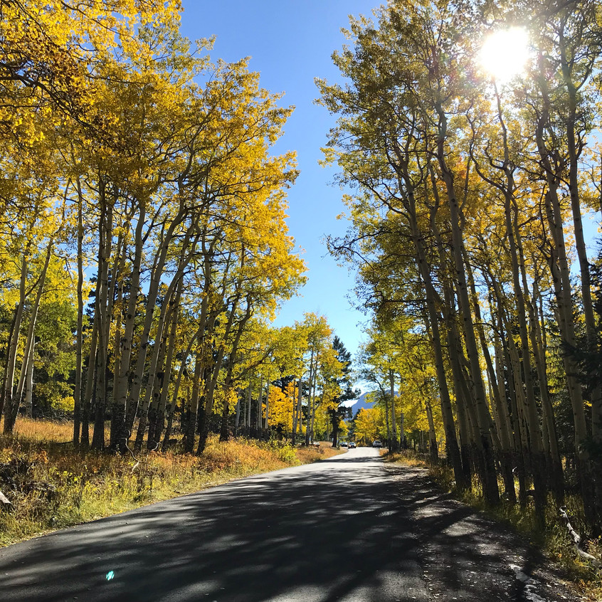 Aspen Trees in Rocky Mountains