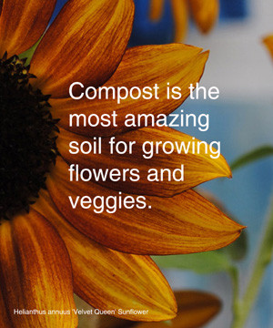 Compost is the most amazing soil for growing flowers and veggies.
