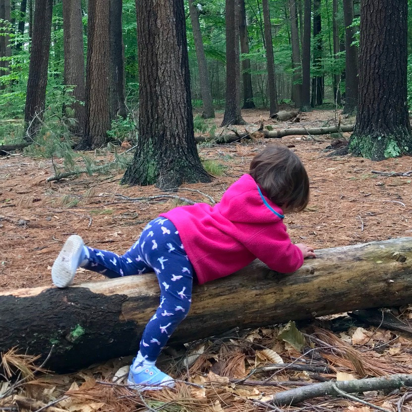 Wike Baby navigating over a fallen tree