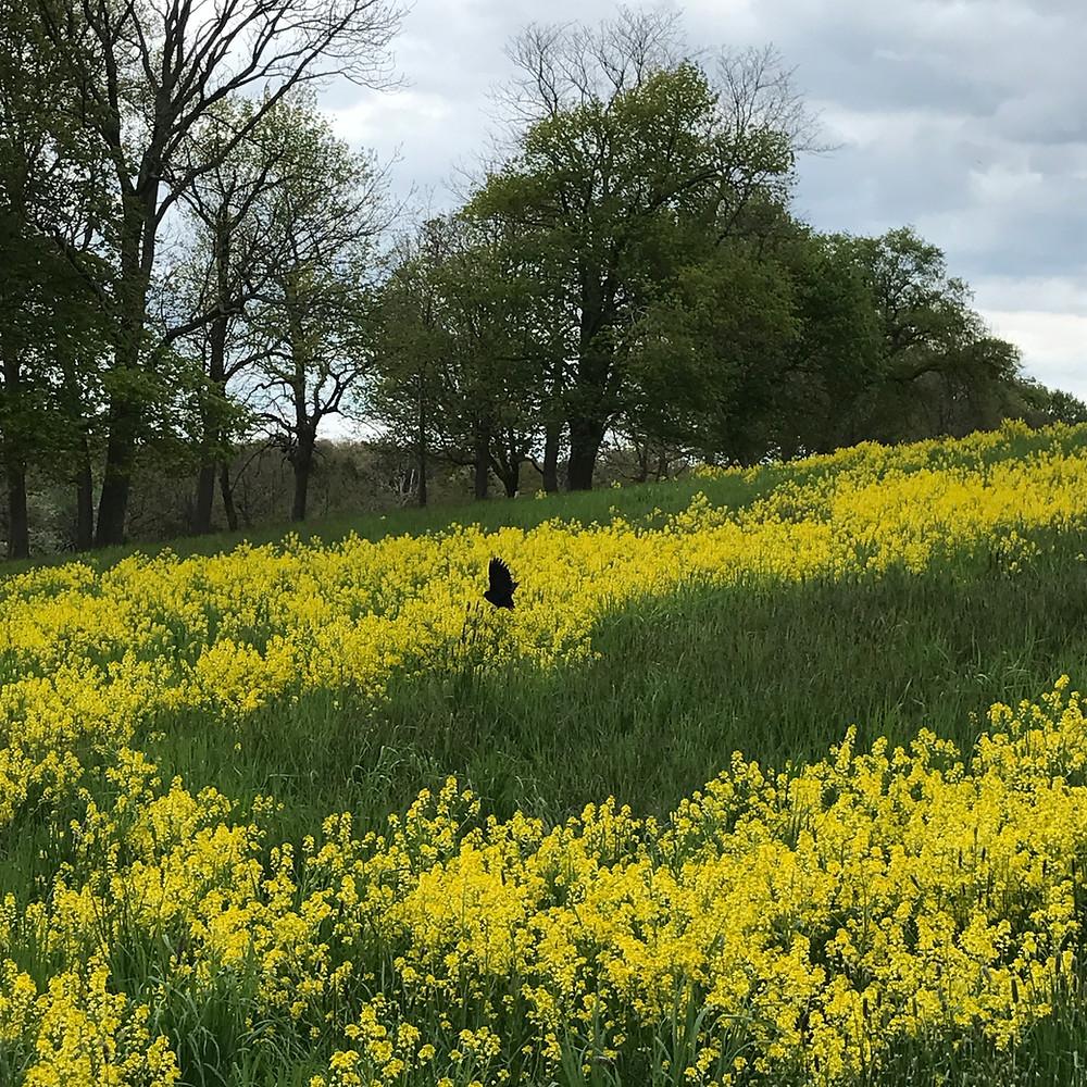 Planter's Hill