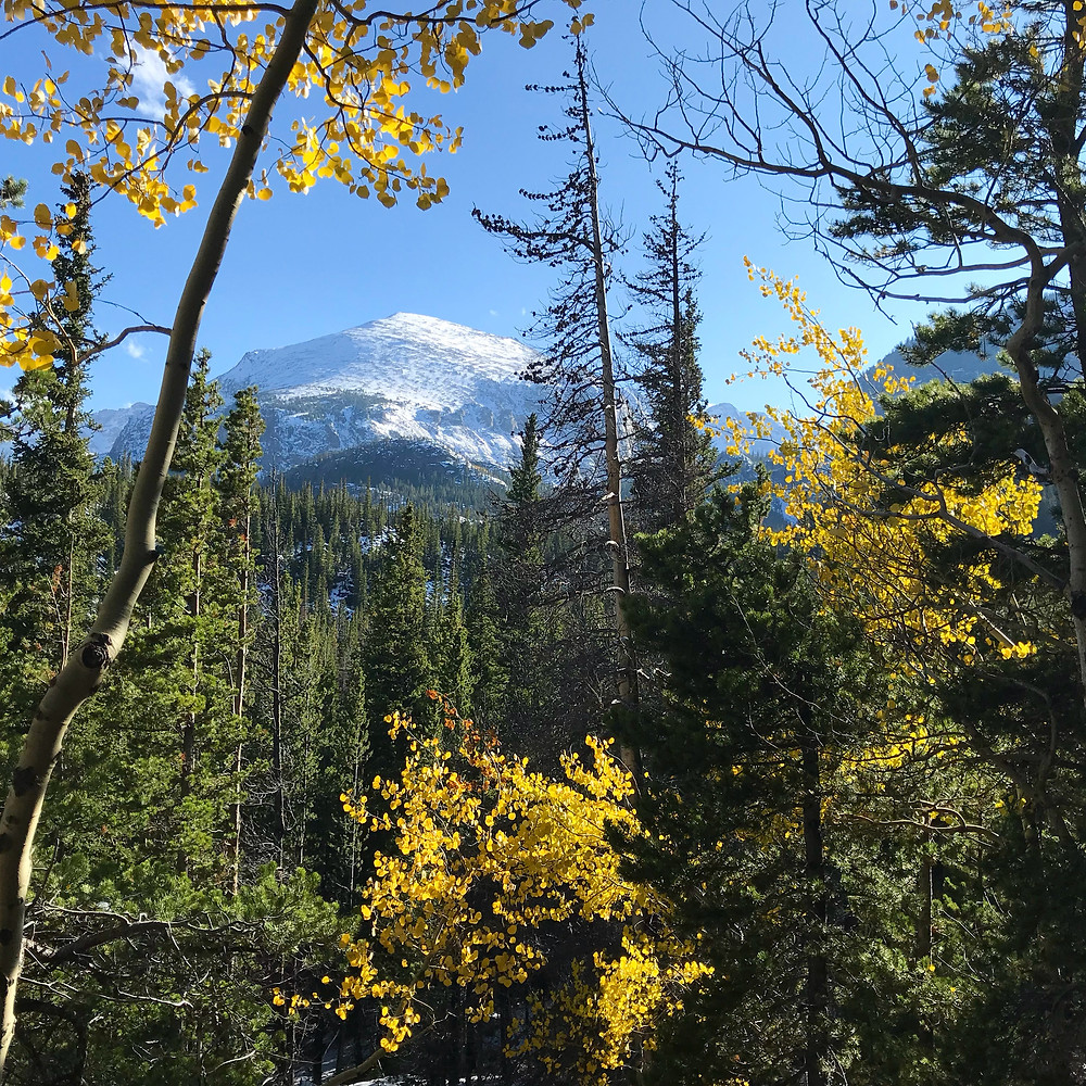 Aspen Trees and Snow Capped Mountains in Rocky Mountain National Park