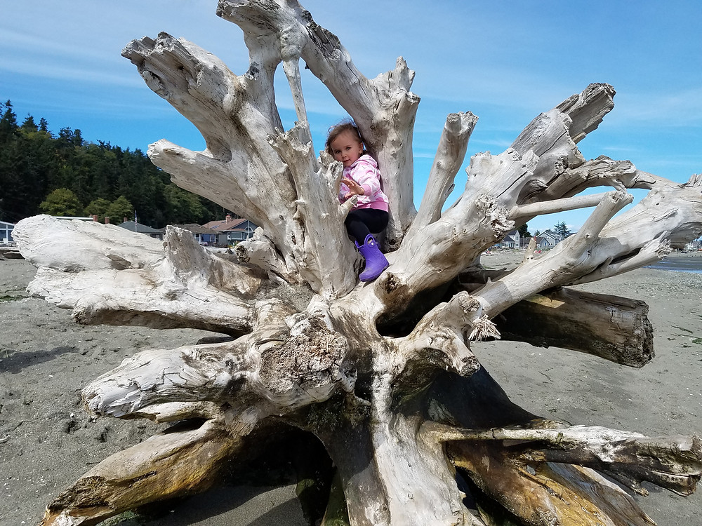 Girl climbing on driftwood, Photo by Karen on Instagram @tyrannosaurustreks