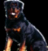 Rottweiler Dog Darts