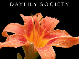 Kindness in Action: Hattiesburg Area Daylily Society planning big events