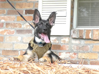 """USM kicks off """"Paws for Patriots"""" program with first puppy"""