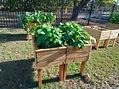 breakaway herb garden2