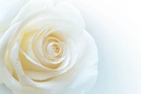 Sfondo rosa bianca.jpg