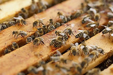 beehive-1143380_640.jpg