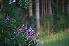 nature-2907361_1920.jpg