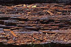 wood-5440159_1280.jpg