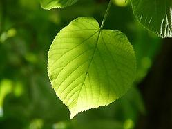 tree-nature-branch-light-plant-sunlight-