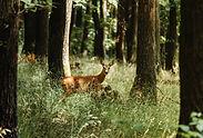 deer-5406930_1920.jpg