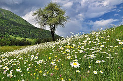 nature-3398301_1920.jpg