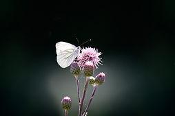 butterfly-1663482_1280.jpg