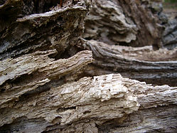 dead_wood.jpg