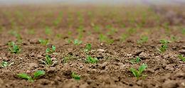 seedlings-4186033_1280.jpg
