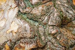 black-pine-3384892_1920.jpg