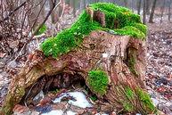 tree-stump-820071_1280.jpg