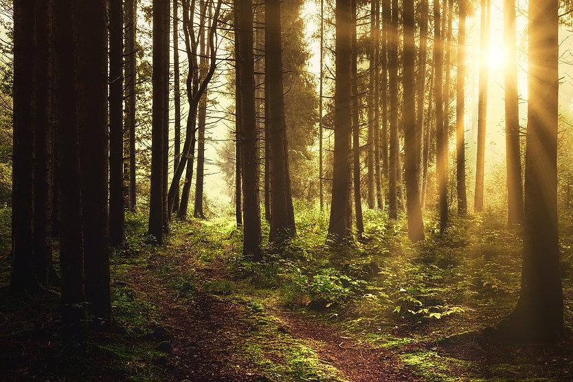 forest-5350786_1920.jpg