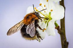 blossom-2204795_1920.jpg