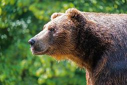 bear-4495348_1280.jpg