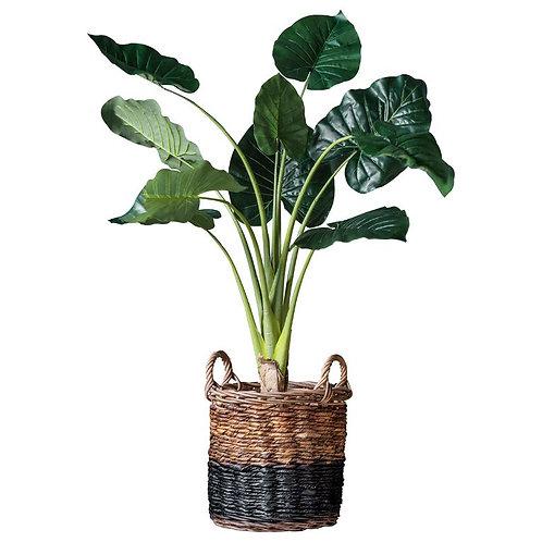 Dasheen Fake Plant