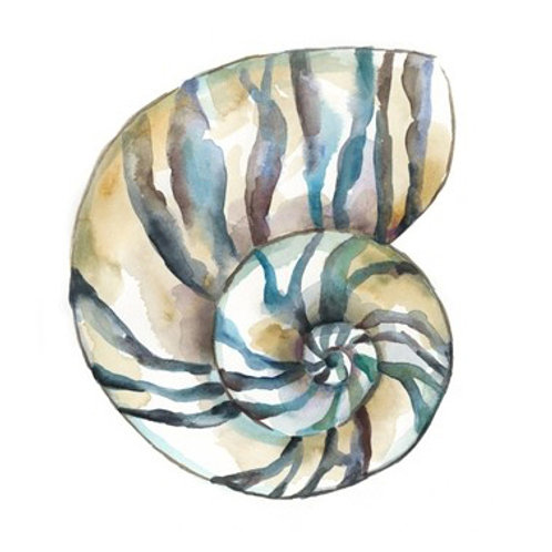 Aquarelle Shells II - Canvas Art