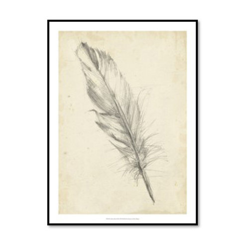Feather Sketch III - Framed & Mounted